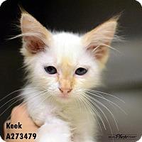 Adopt A Pet :: KEEK - Conroe, TX
