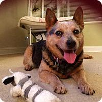 Adopt A Pet :: Kona - Anaheim, CA