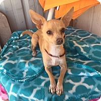 Adopt A Pet :: LANA - Elk Grove, CA