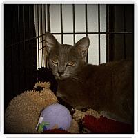 Adopt A Pet :: ALTHEA - Medford, WI