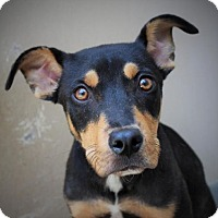 Adopt A Pet :: ANITA - Red Bluff, CA