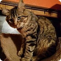Adopt A Pet :: Beowulf - Ennis, TX