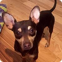Adopt A Pet :: Jaake - Tijeras, NM