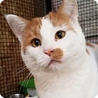 Adopt A Pet :: Rocky - Colfax, IA