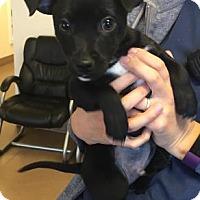 Adopt A Pet :: Brian - Hendersonville, NC