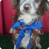 Adopt A Pet :: RALPHIE - pasadena, CA