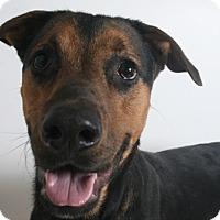 Adopt A Pet :: Mosby - Redding, CA
