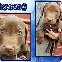 Adopt A Pet :: Hickory - Ringwood, NJ