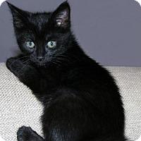 Adopt A Pet :: Rowan - Little Rock, AR