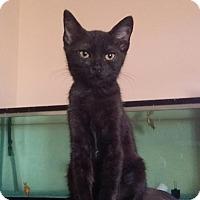 Adopt A Pet :: Ranger - Glendale, AZ
