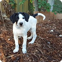 Adopt A Pet :: Noble - Key Largo, FL