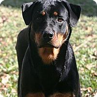 Adopt A Pet :: Athena - Alachua, GA
