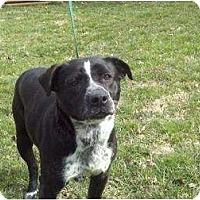 Adopt A Pet :: Reuben ($325 reduced) - Brattleboro, VT