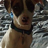 Adopt A Pet :: Praline - Knoxville, TN