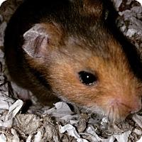 Adopt A Pet :: Caraway - Bensalem, PA