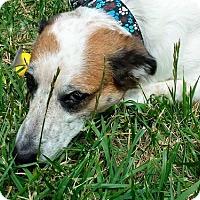 Adopt A Pet :: Mumm - San Francisco, CA