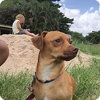 Adopt A Pet :: Sysco - Lighthouse Point, FL