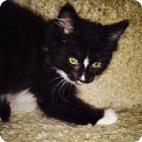 Adopt A Pet :: Paint - McHenry, IL
