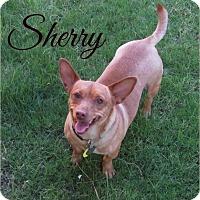 Adopt A Pet :: Sherry - Scottsdale, AZ