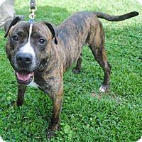 Adopt A Pet :: Jasper A-LAP - Atlanta, GA