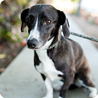 Adopt A Pet :: Mullally - San Diego, CA