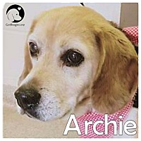 Adopt A Pet :: Archie - Pittsburgh, PA