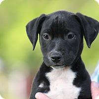 Adopt A Pet :: Justine - Glastonbury, CT