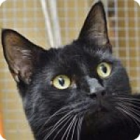 Adopt A Pet :: Webster - Medford, MA