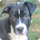 Adopt A Pet :: Rocky is lookin' for LOVE