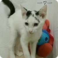 Adopt A Pet :: Tonga - Kendallville, IN