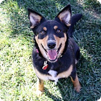 Adopt A Pet :: Tabatha - 31 lbs! - Yorba Linda, CA