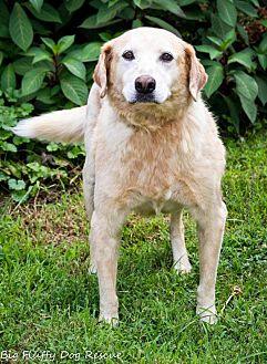 Labrador Retriever Mix Dog for adoption in Enfield, Connecticut - Jarrett