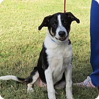 Adopt A Pet :: Holly - Georgetown, TX