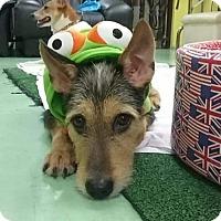 Adopt A Pet :: 'NINJA' - Agoura Hills, CA