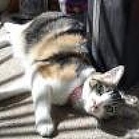 Adopt A Pet :: Mustang Sally - Mission Viejo, CA