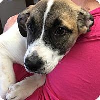 Adopt A Pet :: Beth - Mexia, TX