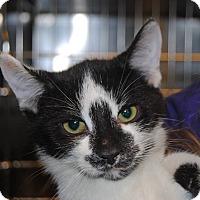 Adopt A Pet :: Biscuit - Windsor, VA