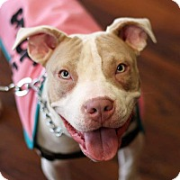 Pit Bull Terrier Mix Dog for adoption in Baltimore, Maryland - Louise