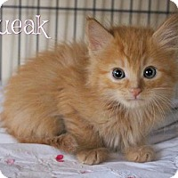 Adopt A Pet :: Squeak - Benton, LA