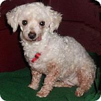 Adopt A Pet :: Caramel - Mooy, AL