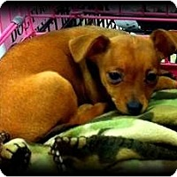 Adopt A Pet :: Catherine - Fowler, CA