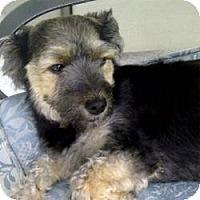 Adopt A Pet :: Cheri - Beechgrove, TN
