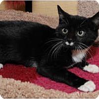Adopt A Pet :: Mamie - Farmingdale, NY