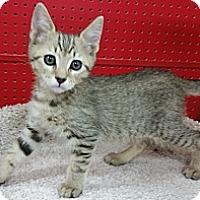 Adopt A Pet :: Camper - Phoenix, AZ