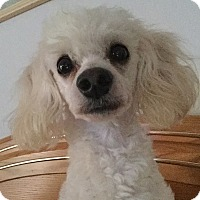 Adopt A Pet :: Bert - Orlando, FL