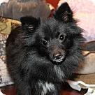 Adopt A Pet :: Nora Ephron