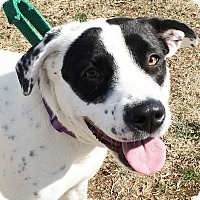 Adopt A Pet :: Dot - Wimberley, TX