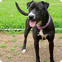 Adopt A Pet :: Lacy - Marlinton, WV