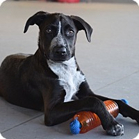Adopt A Pet :: *Grady - PENDING - Westport, CT