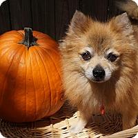 Adopt A Pet :: Farley - conroe, TX